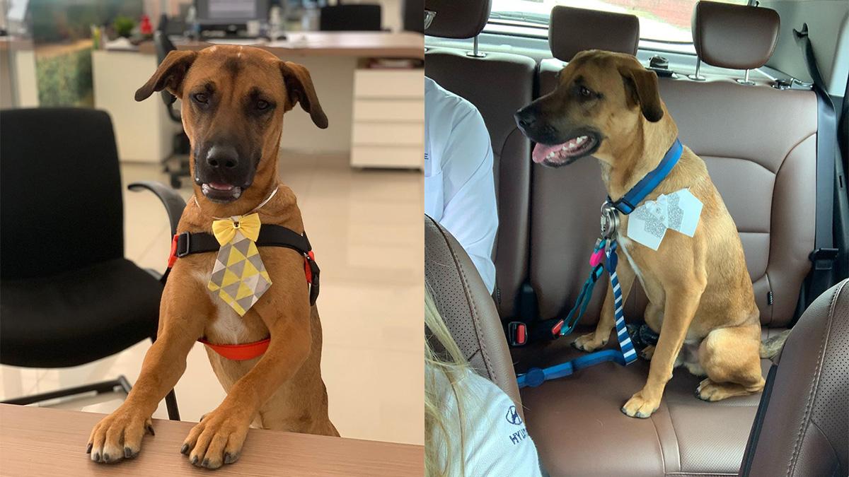 Бродячий пёс каждый день приходил в автосалон. Его взяли на работу